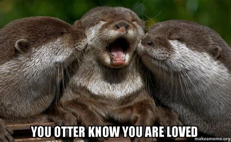 Sea Otter Meme - you otter know you are loved make a meme