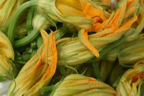 fiori di zucchina i segreti della zucchina edo