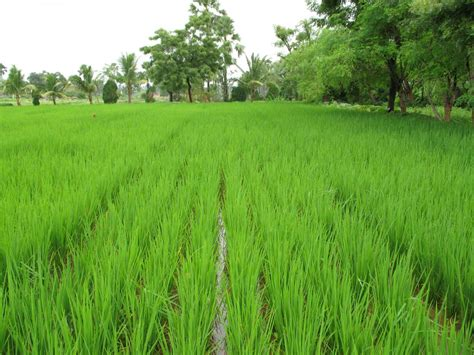 odisha     agriculture university  kbk