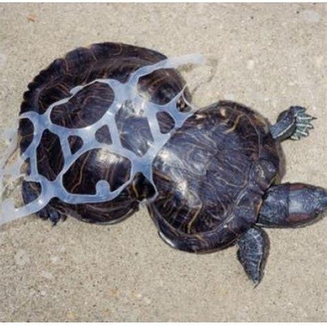 Sk Turtle zbohom a 苡akujeme za oc 225 ny窶ヲ zivapriroda sk