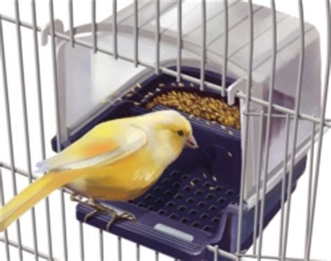 mangiatoie per uccelli da gabbia casa dell allevatore