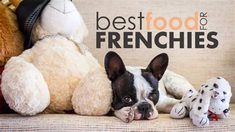 food  french bulldogs   frenchie reach  puppy potential