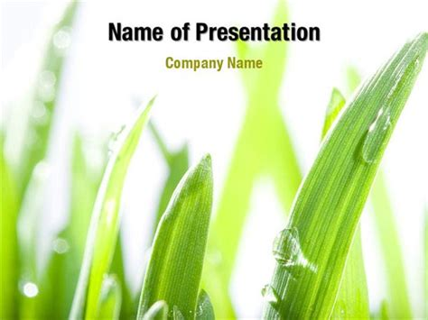 grass powerpoint template grass field powerpoint templates grass field powerpoint