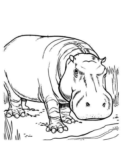 hippo coloring page printable hippo face coloring page coloring pages
