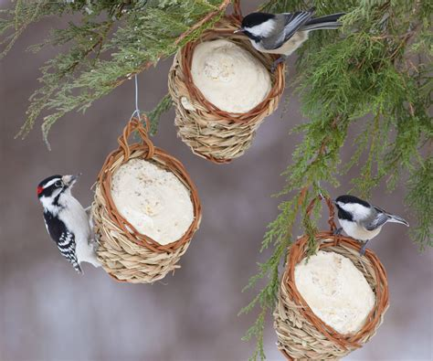 discover different ways to feed suet in winter