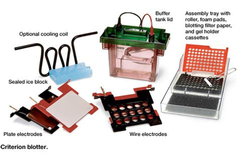 western blot cassette types of western blotting equipment applications