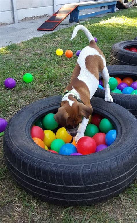 diy dog playground  recycled  tire homemydesign