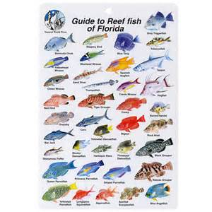 Florida Keys Fish Identification Chart Images & Pictures   Findpik
