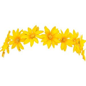 Yellow Sunflo Flower Crown yellow flower crown overlay by am 233 whi