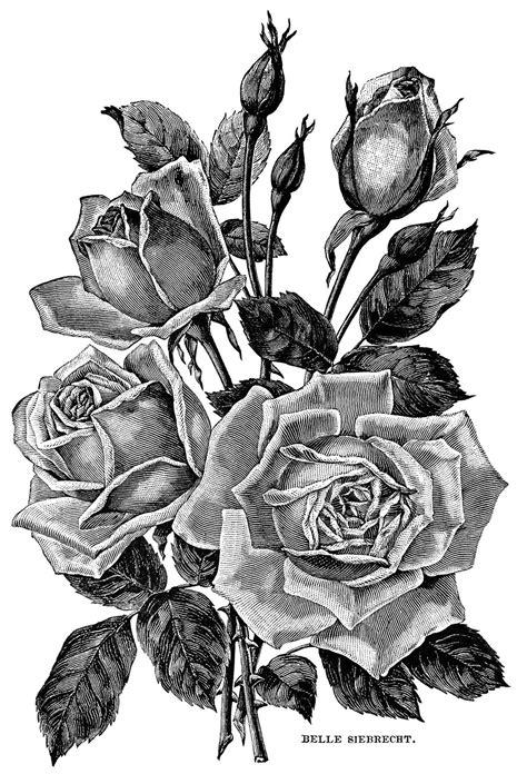 vintage garden clipart black  white flower