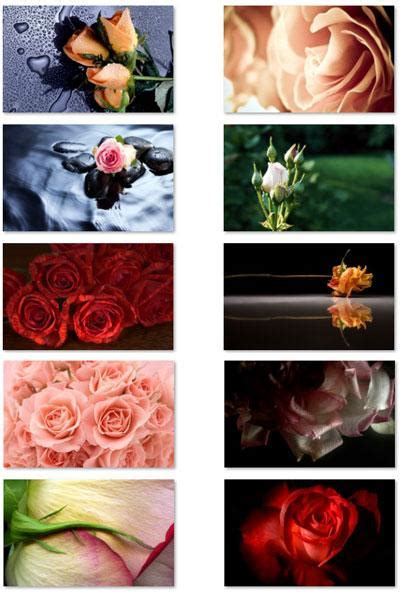 rose themes for win7 187 microsoft rovio prepping for valentines day