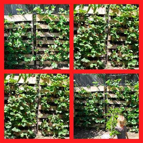 Wall Mounted Strawberry Planter by How To Build A Wall Of Strawberries