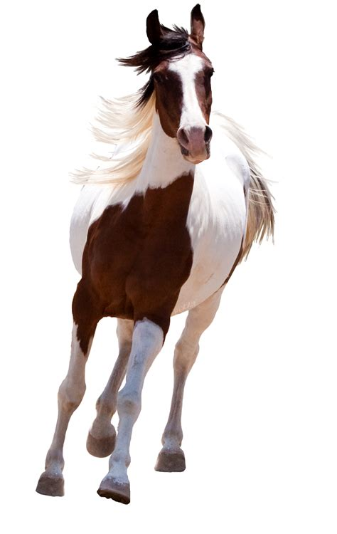 running horse png