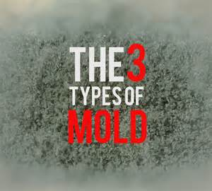 types of mold in bathroom different types of mold