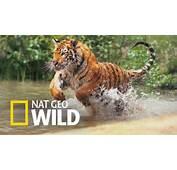 Nat Geo Wild  Full HD Pictures