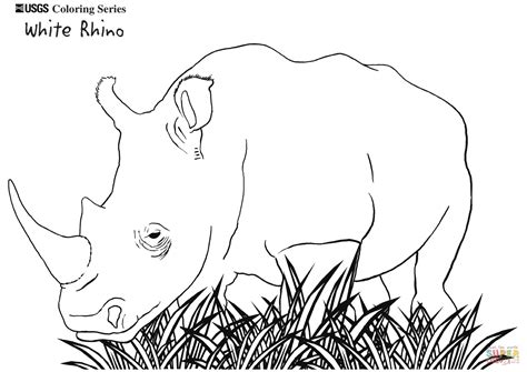 rhino coloring page white rhino coloring page free printable coloring pages