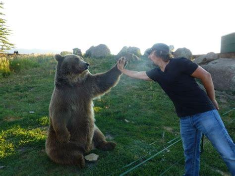 hombres osos facebook amistad entre hombre y oso