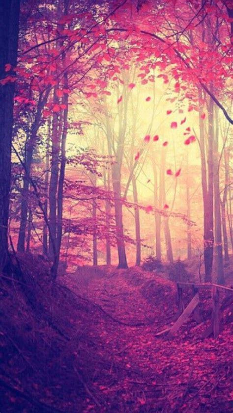 conoce las mas bonitas imagenes wallpapers para celular las 25 mejores ideas sobre fondo de pantalla de bosque en