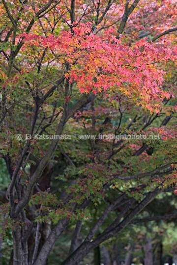autum in kyoto imperial park kyoto japan stock photography