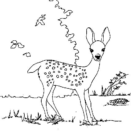 winter deer coloring page deer coloring pages coloringpages1001 com