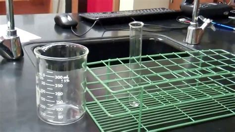 cell membrane permeability lab youtube