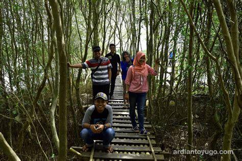 hutan mangrove kulon progo wisata seru ardiantoyugo