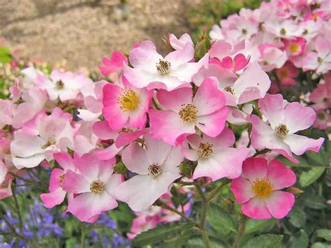 flower with important information flowers pictures images