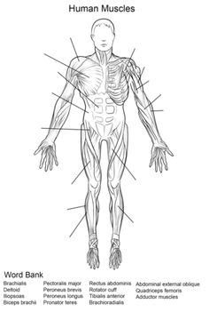 Label Muscles Worksheet   body muscles   Pinterest