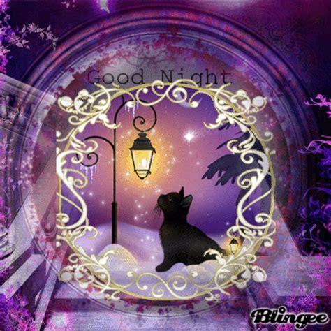 good night cat picture  blingeecom