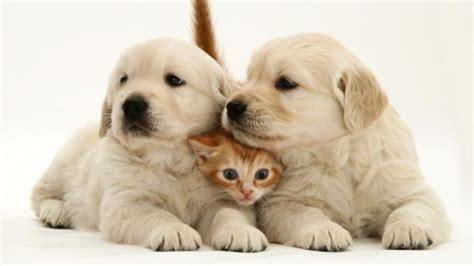 imagenes sensoriales y animicas por qu 233 nos gustan los perros y los gatos pero no los
