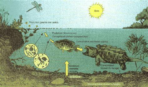 catena alimentare dello stagno ecosistema acquatico e terrestre ecologia appunti di