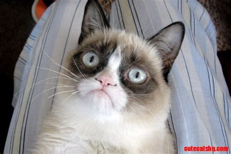 Best Grumpy Cat Memes - 10 best grumpy cat christmas memes we all know someone who is