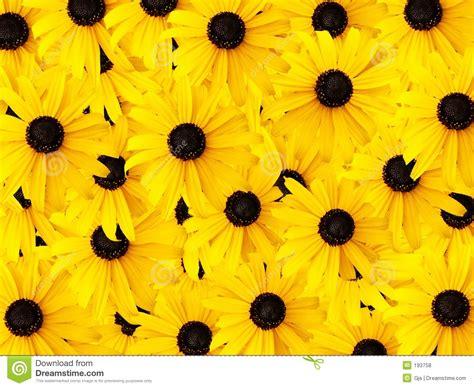 daisy background pattern vector daisy background stock photo image of orange romantic