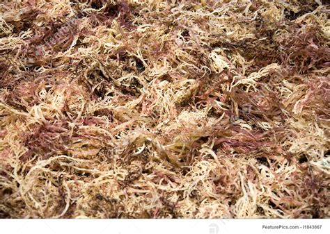 picture of drying seaweed