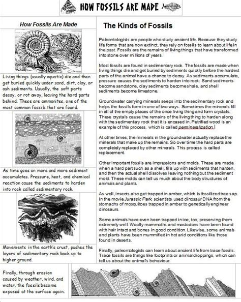 Fossil Worksheets by How Fossils Are Made This One Page Handout Explains How