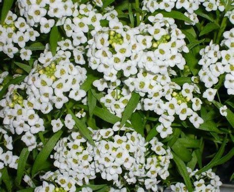 nomi piante da giardino fiori da giardino perenni piante perenni giardino