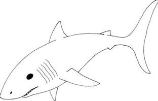 shark template great white shark coloring pages2 jpg 800 215 511 pixels