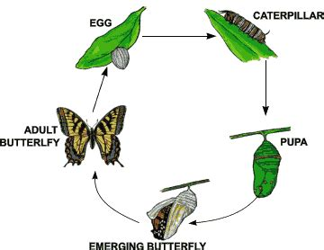 emotional butterfly the metamorphosis and the lessons learned books msttpa go tech licensed for non commercial use only