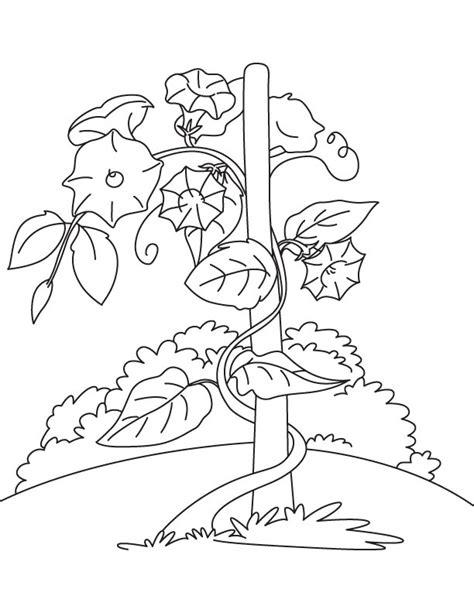 vine coloring pages vine coloring patterns coloring pages