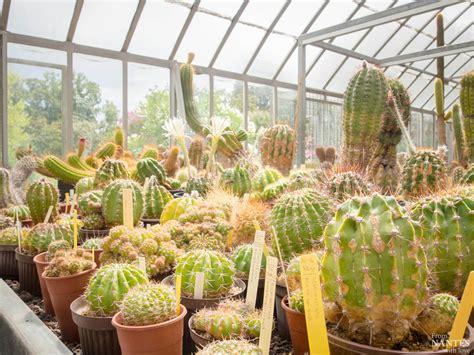 visite des serres du jardin des plantes de nantes