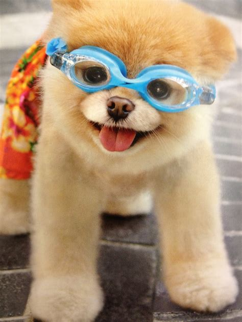 boo the cutest 44 best days of summer images on puppys adorable animals and animals