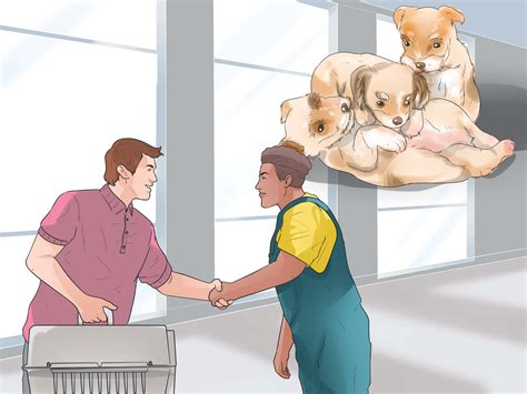 how to breed yorkies how to breed yorkies 12 steps with pictures wikihow