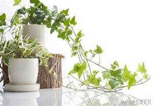 best indoor garden plants how do i choose the best indoor plant pots with pictures