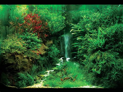 waterfall aquascape aquascaping interior designing for fish tanks