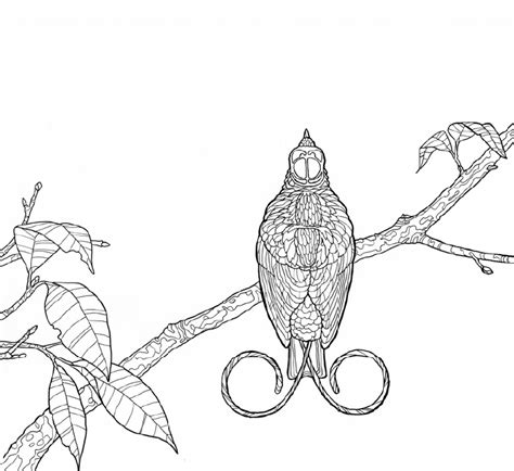 coloring pages bird of paradise birds of paradise a coloring expedition
