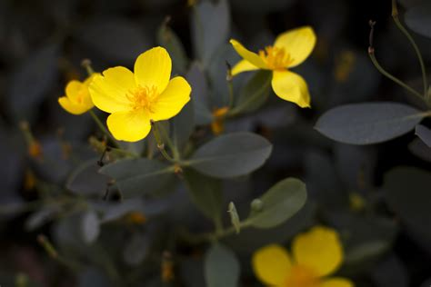 plants that grow in complete darkness slideshow the 13 best calif native drought tolerant