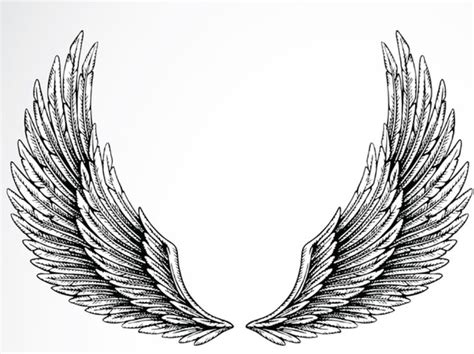 eagle tattoo reference 9 best wing reference images on pinterest wings tattoo