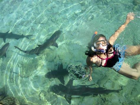 baby shark bahasa jawa swimming with baby shark karimun jawa indonesia my