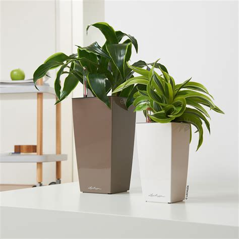 Self Watering Planters Lechuza by Mini And Maxi Cubi Self Watering Planters Lechuza