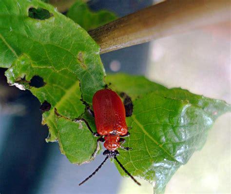 garden pests uk bug in garden images frompo